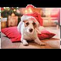Adventskalender für Tiere online kaufen